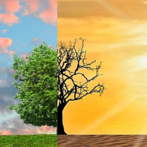A economia das mudanças climáticas